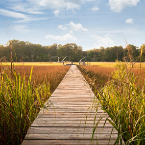 boardwalk in a marsh